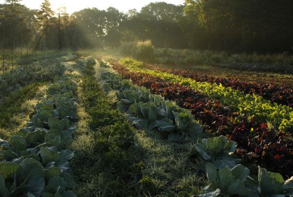 cover crop,Lavori e semine nell'orto a Settembre, lavori nell'orto, sovecio, sovescii, concimazione verde, calendario lunare,