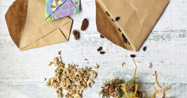 0 cose da sapere sulle sementi, Germinabilità dei semi, Vitalità dei semi, Temperature di germinazione, Sementi di varietà ibride F1, Sementi di varietà a impollinazione aperta, Il contenitore migliore per conservare i semi