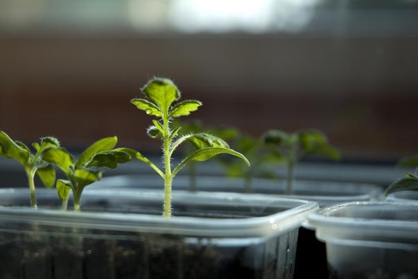 percentuale di germinazione, orto a febbraio, lavori nell'orto, calendario lunare di febbraio