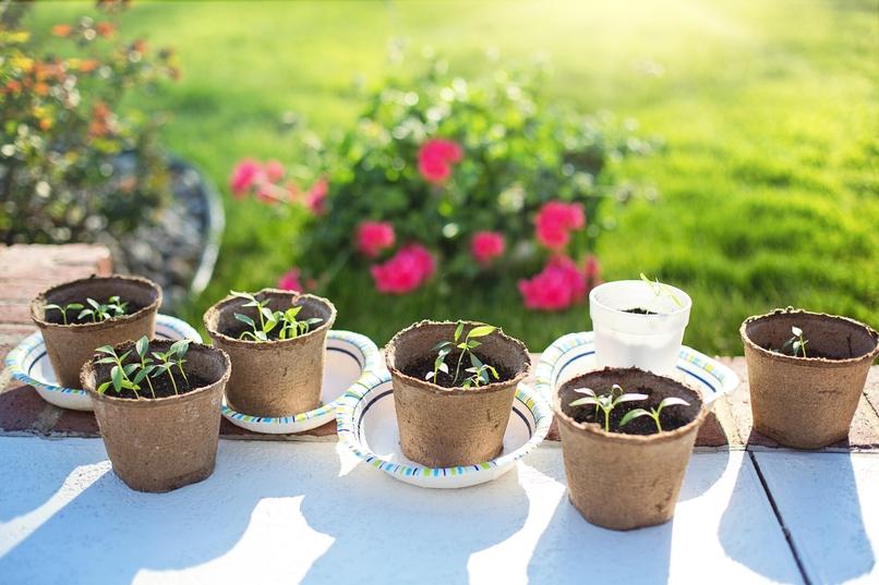 semine e trapianti a marzo, lavori in orto a marzo, cosa seminare a marzo