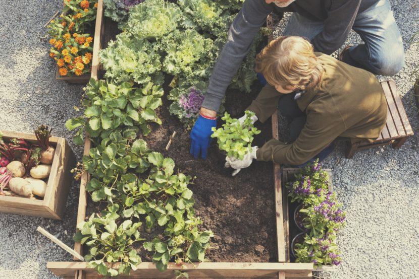 Quando il freddo invernale limita i lavori nell'orto, è bene iniziare a pianificare le operazioni da svolgere in primavera.