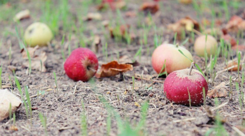 lavori da effettuare nell'orto nel mese di ottobre