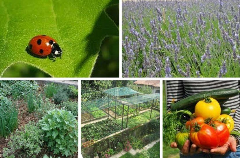 zdrav vrt