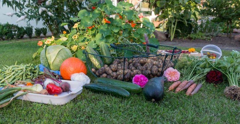 L'orto in autunno