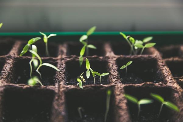 lavori in orto a gennaio, propagatore per semi, serra riscaldata, calendario lunari di gennaio, calendario della semina di gennaio