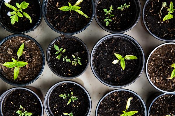 lavori nell'orto a maggio, orto in questo mese, trapianto di piantine in serra, quando seminare a maggio, cosa seminare a maggio, cosa si semina in campo aperto a maggio, calendario lunare maggio, trapianto di sementi biologice a maggio