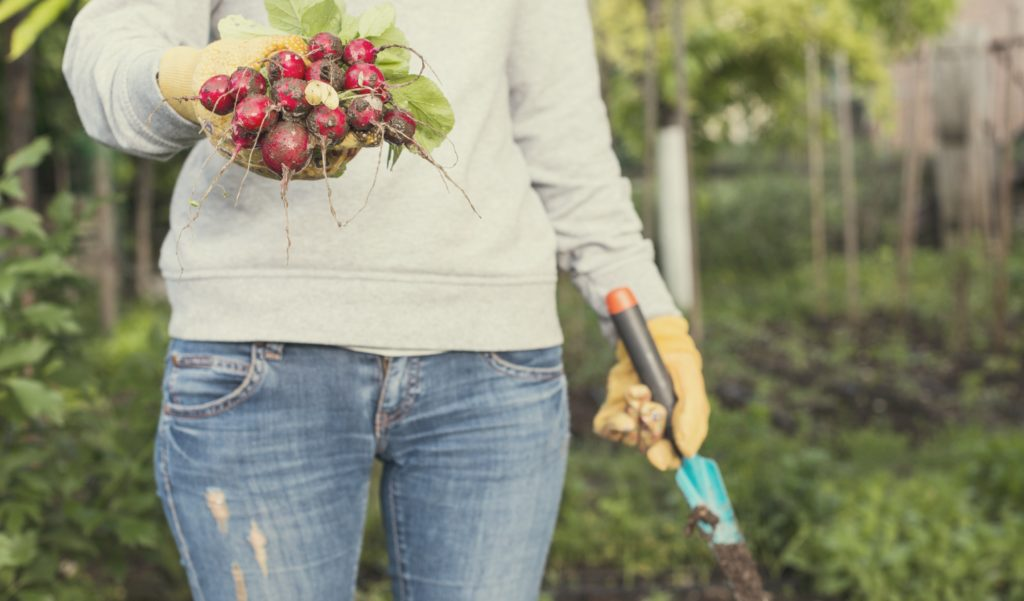 Come pianificare, organizzare e curare il tuo orto.