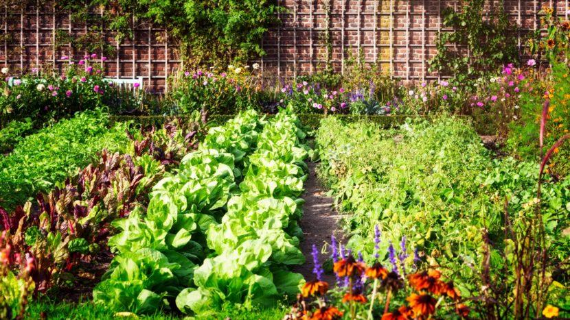 Orto sano con erbe aromatiche e fiori