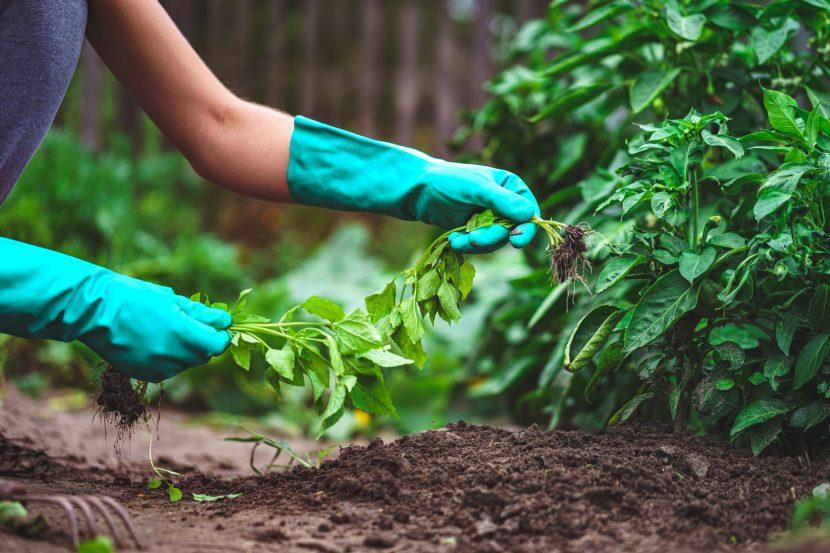 eliminare le erbacce