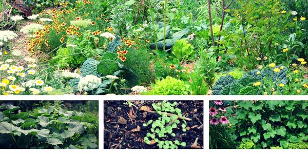 fiori orto erbe progettazione dell'orto