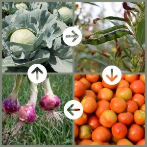rotazione colture ortaggi