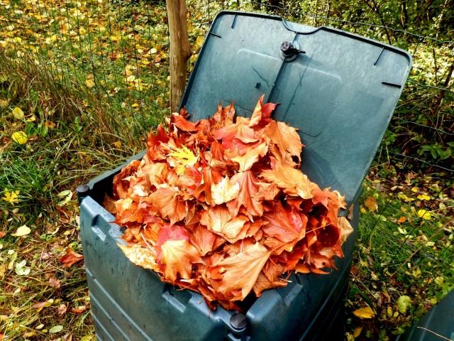 foglie secche cadute