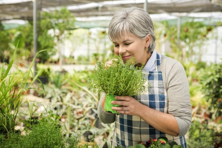 piante aromatiche in garden centers