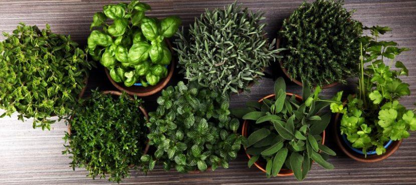 erbe aromatiche per non esperti
