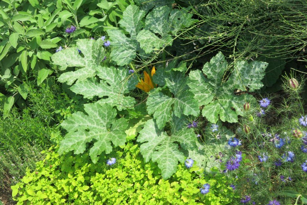combinazione ortaggi e erbe aromatiche