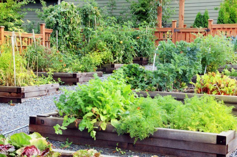 orto in estate lussureggiante e biologico